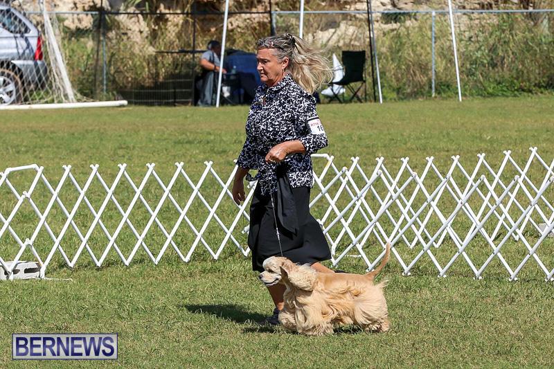 Bermuda-Kennel-Club-Dog-Show-October-23-2016-75