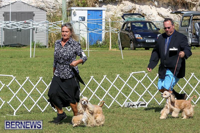 Bermuda-Kennel-Club-Dog-Show-October-23-2016-76