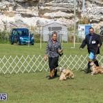Bermuda Kennel Club Dog Show, October 23 2016-77
