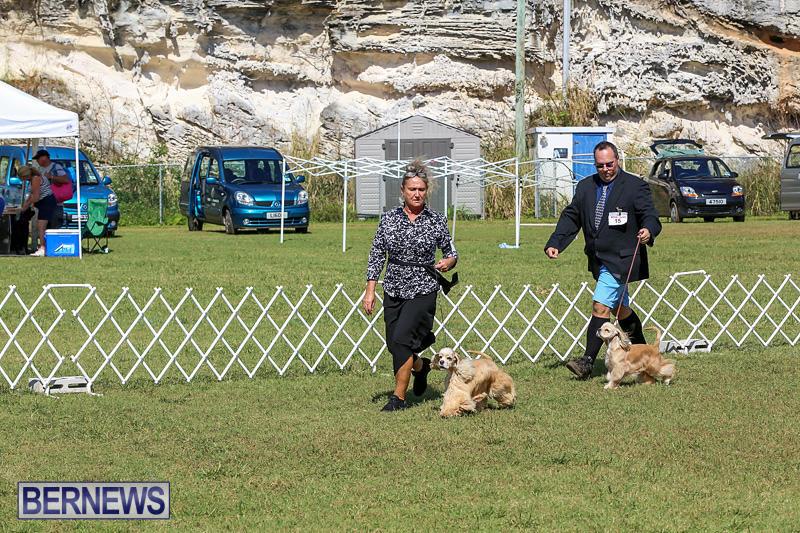 Bermuda-Kennel-Club-Dog-Show-October-23-2016-77