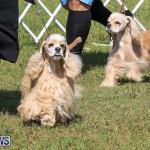 Bermuda Kennel Club Dog Show, October 23 2016-78