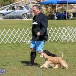 Bermuda Kennel Club Dog Show, October 23 2016-84