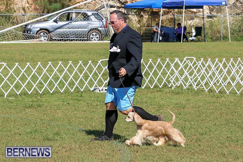 Bermuda-Kennel-Club-Dog-Show-October-23-2016-84