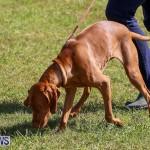 Bermuda Kennel Club Dog Show, October 23 2016-85