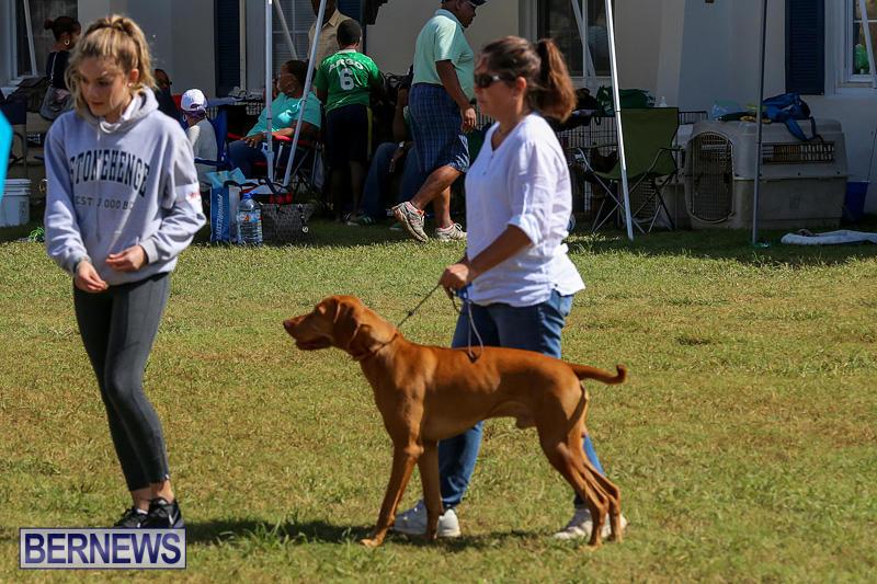 Bermuda-Kennel-Club-Dog-Show-October-23-2016-88