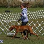 Bermuda Kennel Club Dog Show, October 23 2016-89