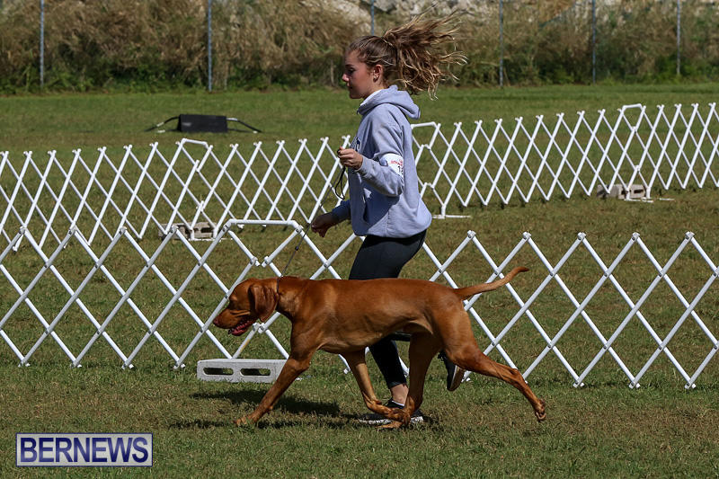 Bermuda-Kennel-Club-Dog-Show-October-23-2016-89
