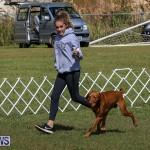 Bermuda Kennel Club Dog Show, October 23 2016-90
