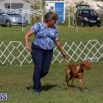 Bermuda Kennel Club Dog Show, October 23 2016-93