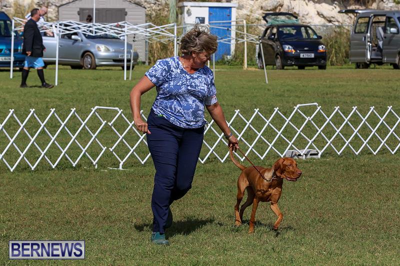 Bermuda-Kennel-Club-Dog-Show-October-23-2016-93