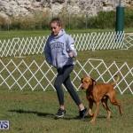 Bermuda Kennel Club Dog Show, October 23 2016-94