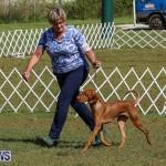 Bermuda Kennel Club Dog Show, October 23 2016-97