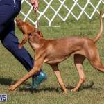 Bermuda Kennel Club Dog Show, October 23 2016-99