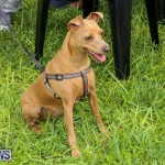 Blessing Of The Animals Bermuda, October 2 2016-10