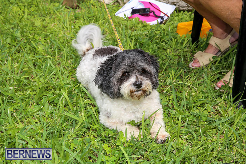 Blessing-Of-The-Animals-Bermuda-October-2-2016-13