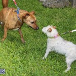 Blessing Of The Animals Bermuda, October 2 2016-15