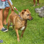 Blessing Of The Animals Bermuda, October 2 2016-17