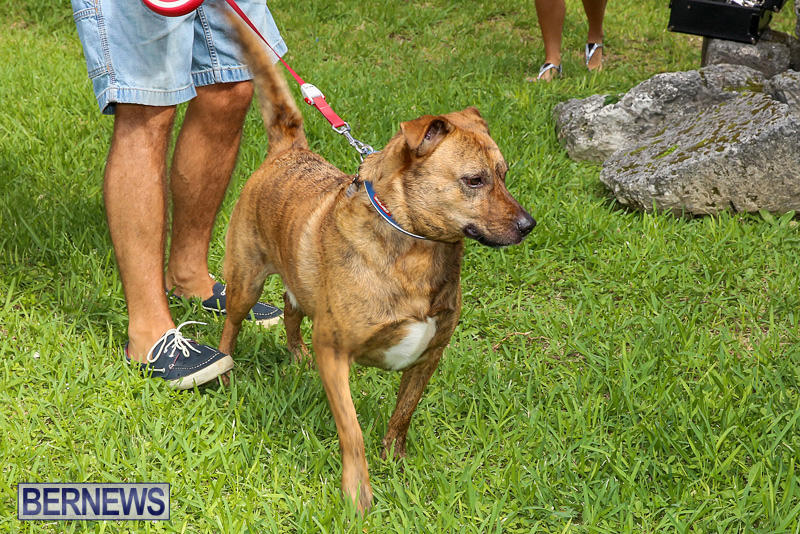 Blessing-Of-The-Animals-Bermuda-October-2-2016-17