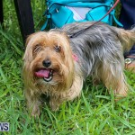 Blessing Of The Animals Bermuda, October 2 2016-27