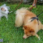 Blessing Of The Animals Bermuda, October 2 2016-30