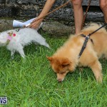 Blessing Of The Animals Bermuda, October 2 2016-33