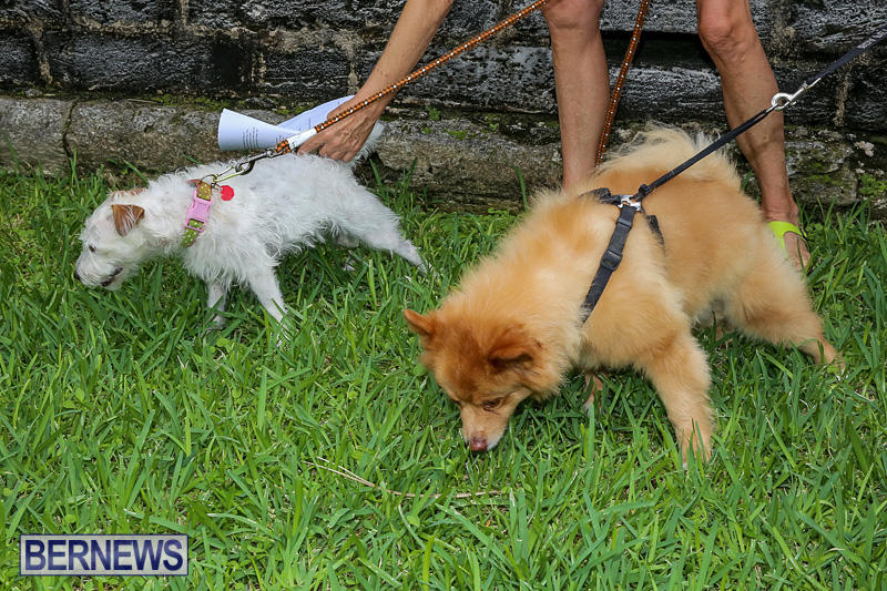 Blessing-Of-The-Animals-Bermuda-October-2-2016-33
