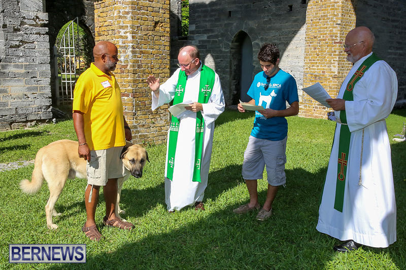 Blessing-Of-The-Animals-Bermuda-October-2-2016-40