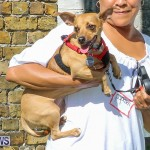 Blessing Of The Animals Bermuda, October 2 2016-44