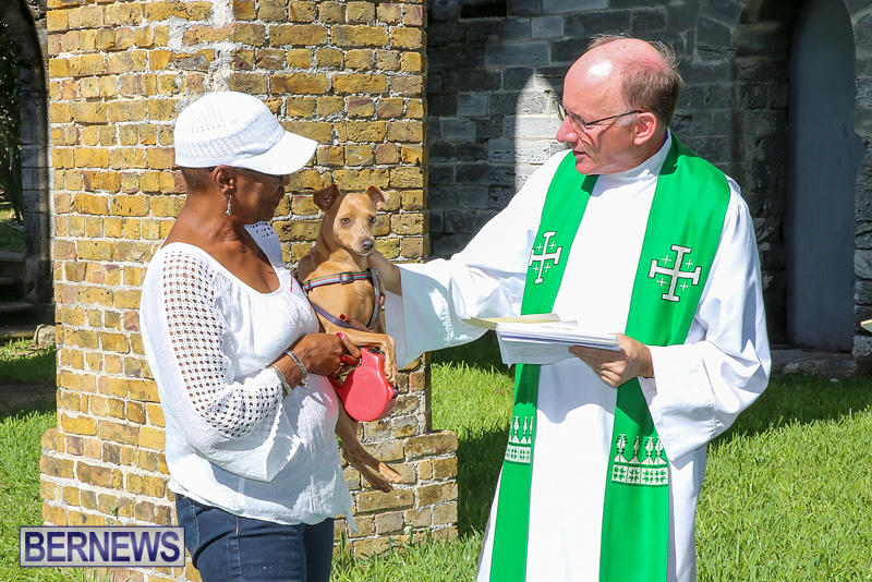 Blessing-Of-The-Animals-Bermuda-October-2-2016-46