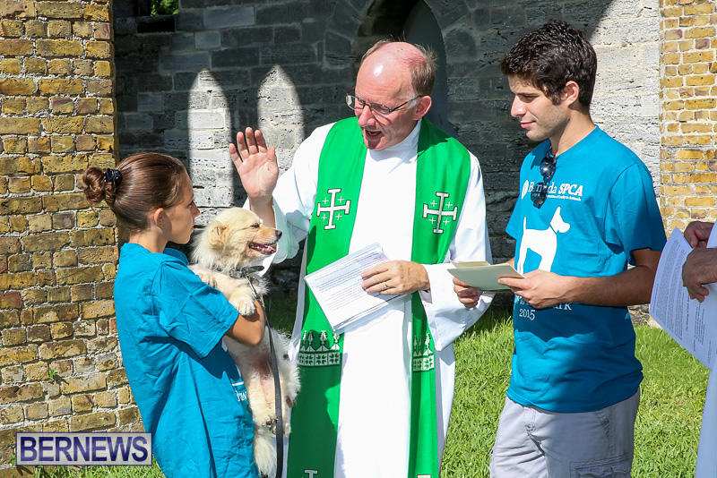 Blessing-Of-The-Animals-Bermuda-October-2-2016-52