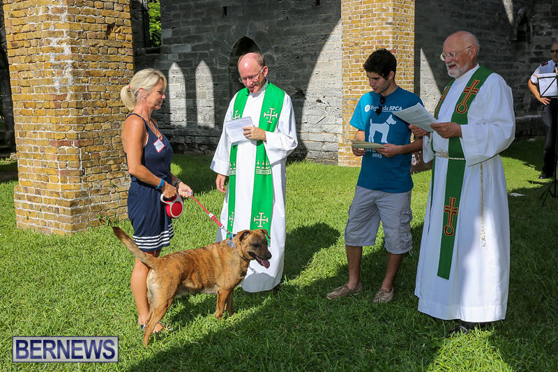 Blessing-Of-The-Animals-Bermuda-October-2-2016-58