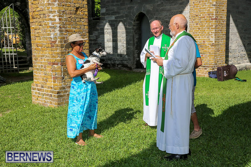 Blessing-Of-The-Animals-Bermuda-October-2-2016-62
