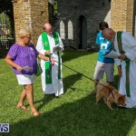 Blessing Of The Animals Bermuda, October 2 2016-66