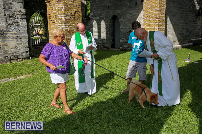 Blessing-Of-The-Animals-Bermuda-October-2-2016-66