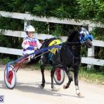Harness Pony Racing Bermuda Oct 9 2016 (10)