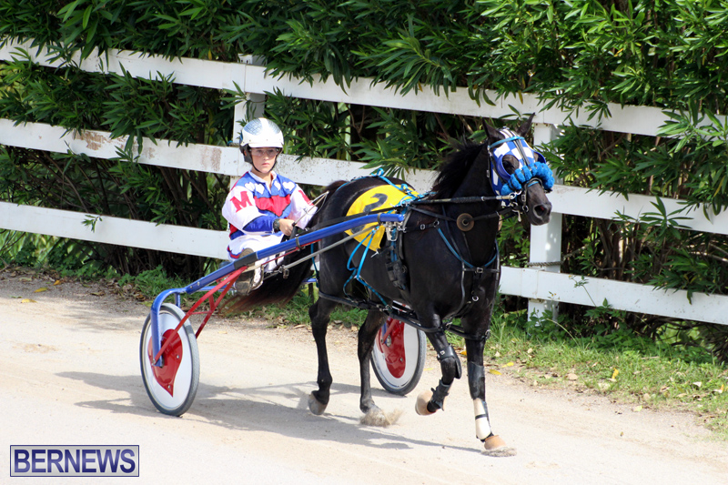 Harness-Pony-Racing-Bermuda-Oct-9-2016-10