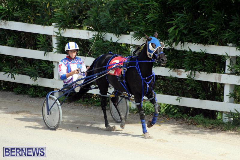Harness-Pony-Racing-Bermuda-Oct-9-2016-11