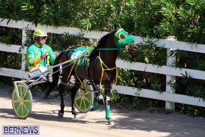 Harness-Pony-Racing-Bermuda-Oct-9-2016-2