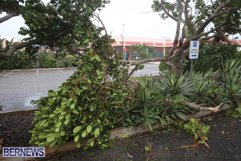 Post Hurricane Nicole Oct 13 2016 (24)