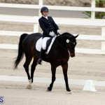 FEI World Dressage Challenge Bermuda Nov 12 2016 (17)