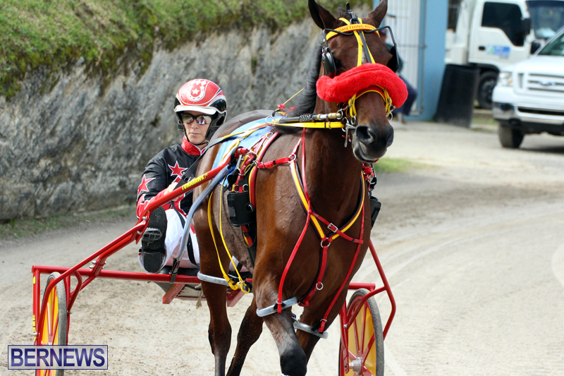 Remembrance-Day-Harness-Racing-Bermuda-Nov-11-2016-6