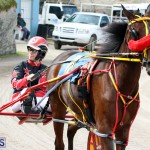 Remembrance Day Harness Racing Bermuda Nov 11 2016 (7)
