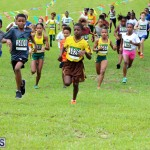 Run Bermuda Nov 2016 (2)