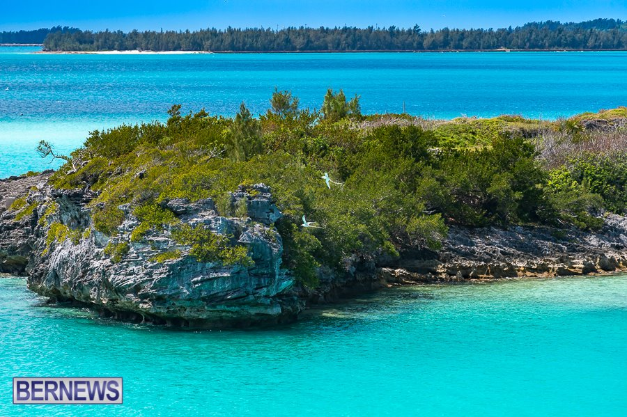 386 Longtails Coopers Island Bermuda Generic Dec 2016