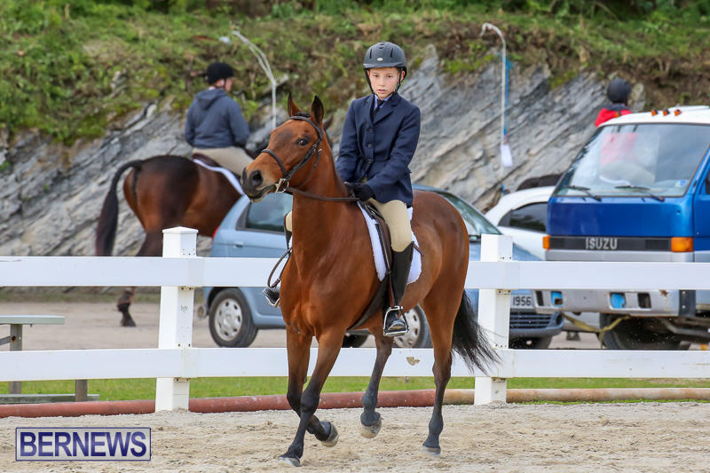 RES-Horse-Show-Bermuda-January-21-2017-10