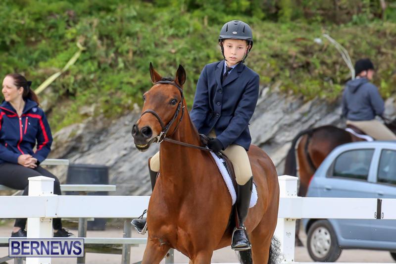 RES-Horse-Show-Bermuda-January-21-2017-11