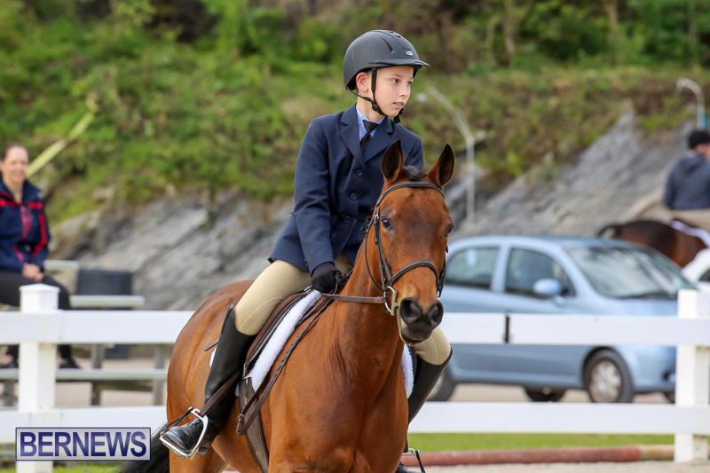 RES-Horse-Show-Bermuda-January-21-2017-12
