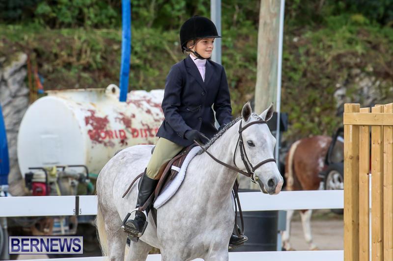 RES-Horse-Show-Bermuda-January-21-2017-2