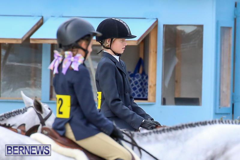 RES-Horse-Show-Bermuda-January-21-2017-25