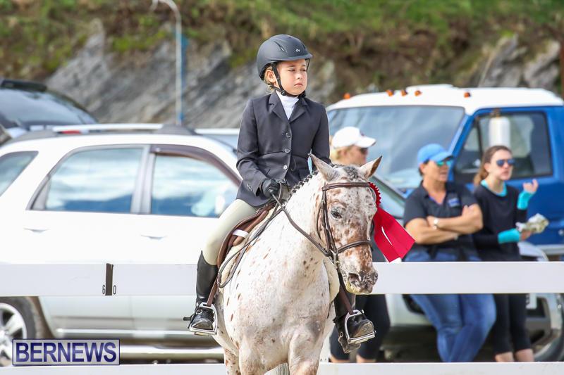 RES-Horse-Show-Bermuda-January-21-2017-45